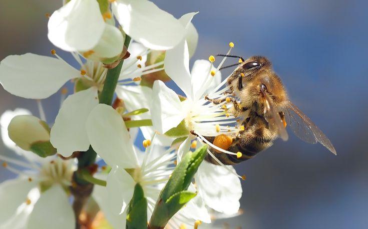 ¡Hola amig@s de Farmacia Abadía! Hemos preparado un post dedicado a unas de las protagonistas de la #primavera, las #abejas. Además de aportarnos muchos beneficios también nos dan algún que otro susto si nos acercamos demasiado pudiendo picarnos. Os hablamos de ello en nuestro post http://farmaciaabadia.com/blog/que-hacer-con-una-picadura-de-abeja/