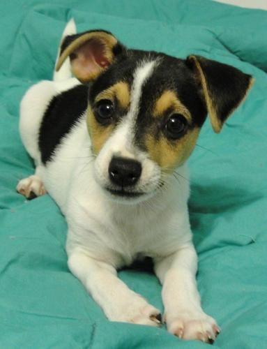 Adopt PUPPY MACY on Petfinder