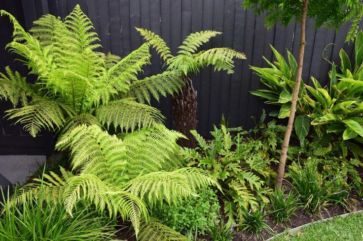 14 months in - Bali Inspired Garden Design - Melbourne, Australia - Botanical Space Landscapes - Landscape Design & Construction - www.botanicalspace.com
