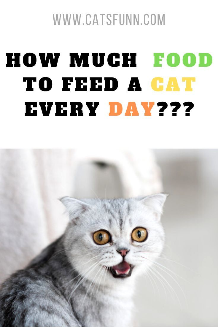 How Much Should I Feed My Cat In 2020 Cat Health Problems Cats Cat Health