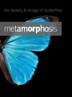 """""""If you saw a mechanical device, of the sophistication of a butterfly, you would not for a moment hesitate to ascribe that to intelligence."""" Check out this Video Clip! http://www.odspartnership.org/2/post/2012/02/butterflies-a-case-for-intelligent-design.html: Wild Outdoors P, Video Clip, Natural Pics, Videos Clip, Moments Hesit, Turquoise Happiness, Mechanical Devices"""