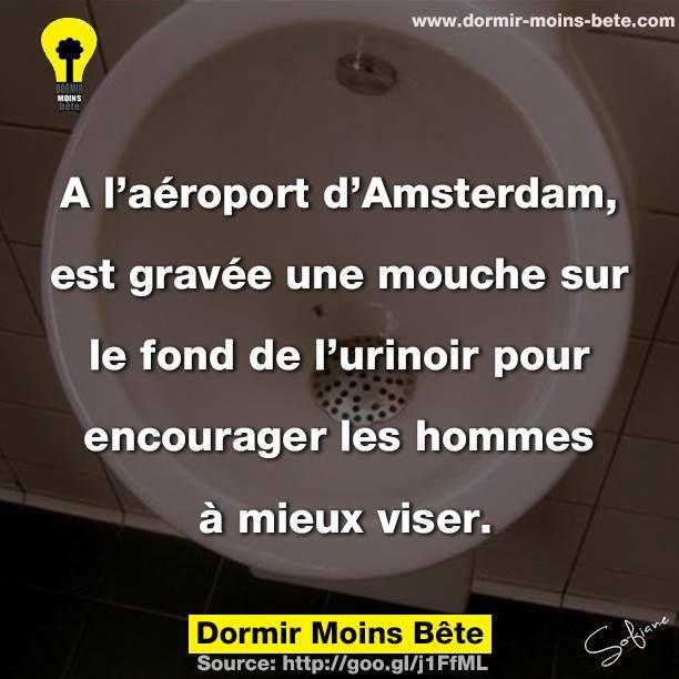 À l'aéroport d'Amsterdam, est gravée une mouche sur le fond de l'urinoir pour encourager les hommes à mieux viser.