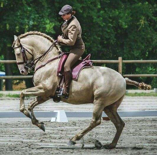 Beautiful horse to ride.