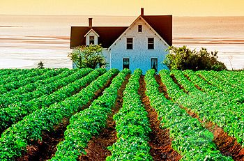 Potato field on Farm Desable, Prince Edward Island, Canada | Stock ...