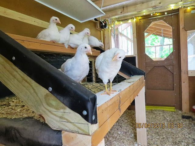 Cool Coops! ~ The Chick Compound -- Community Chickens