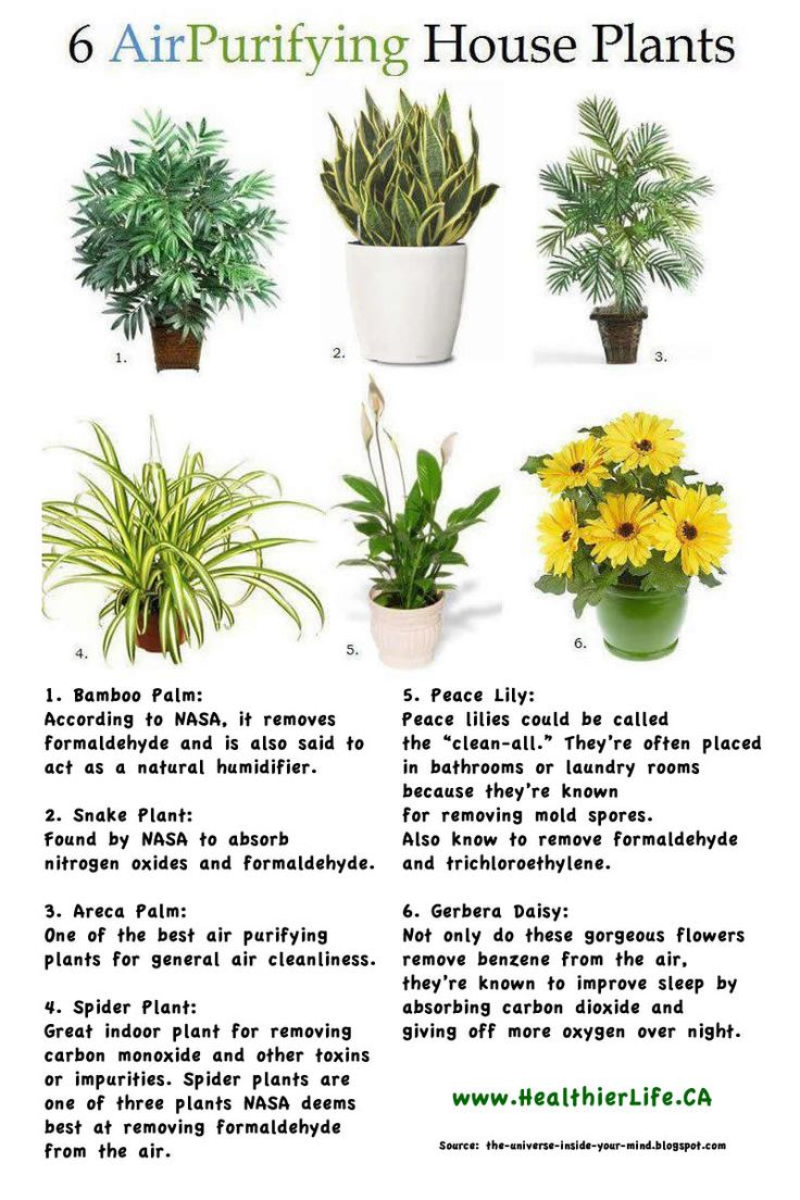 Air Purifying Plants - I want either #1 or #3