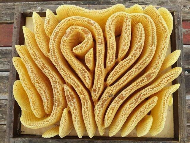Bees:  Natural heart-shaped #honeycomb.