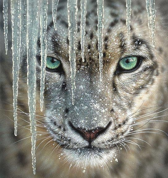 Amur Leopard - staring into extinction by bigcatphotos UK | See More Pictures