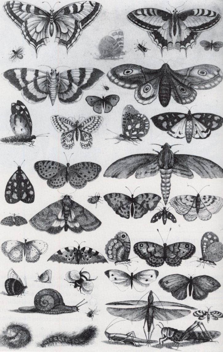 Forty-One Insects, Moths and Butterflies by Wenceslaus Hollar, 1646. Etching from Muscarum Scarabeorum | Metropolitan Museum of Art