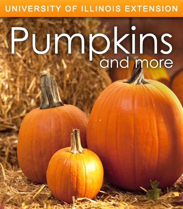 Learn about fall's favorite plant! Everything  from pumpkin patch locations, growing tips, fun facts, and more!
