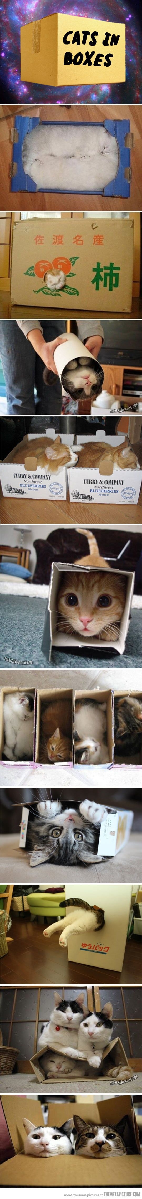 Cats and boxes. I don't know what it is with them, but cats LOVE boxes.
