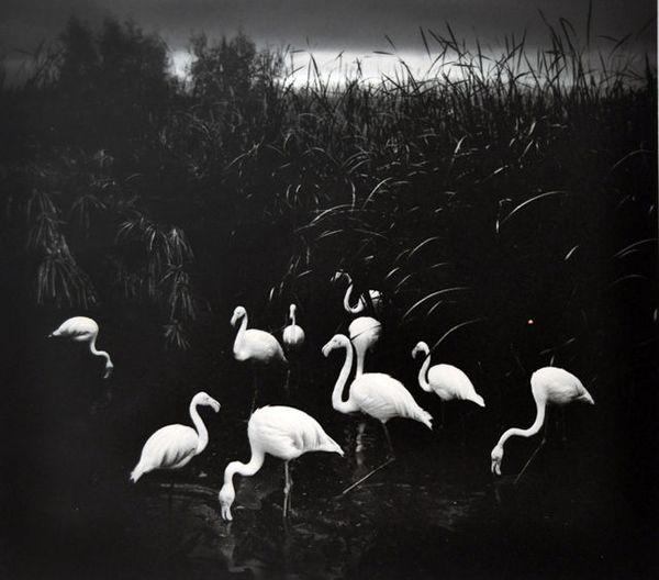 Pentti Sammallahti - Inspiration from Masters of Photography