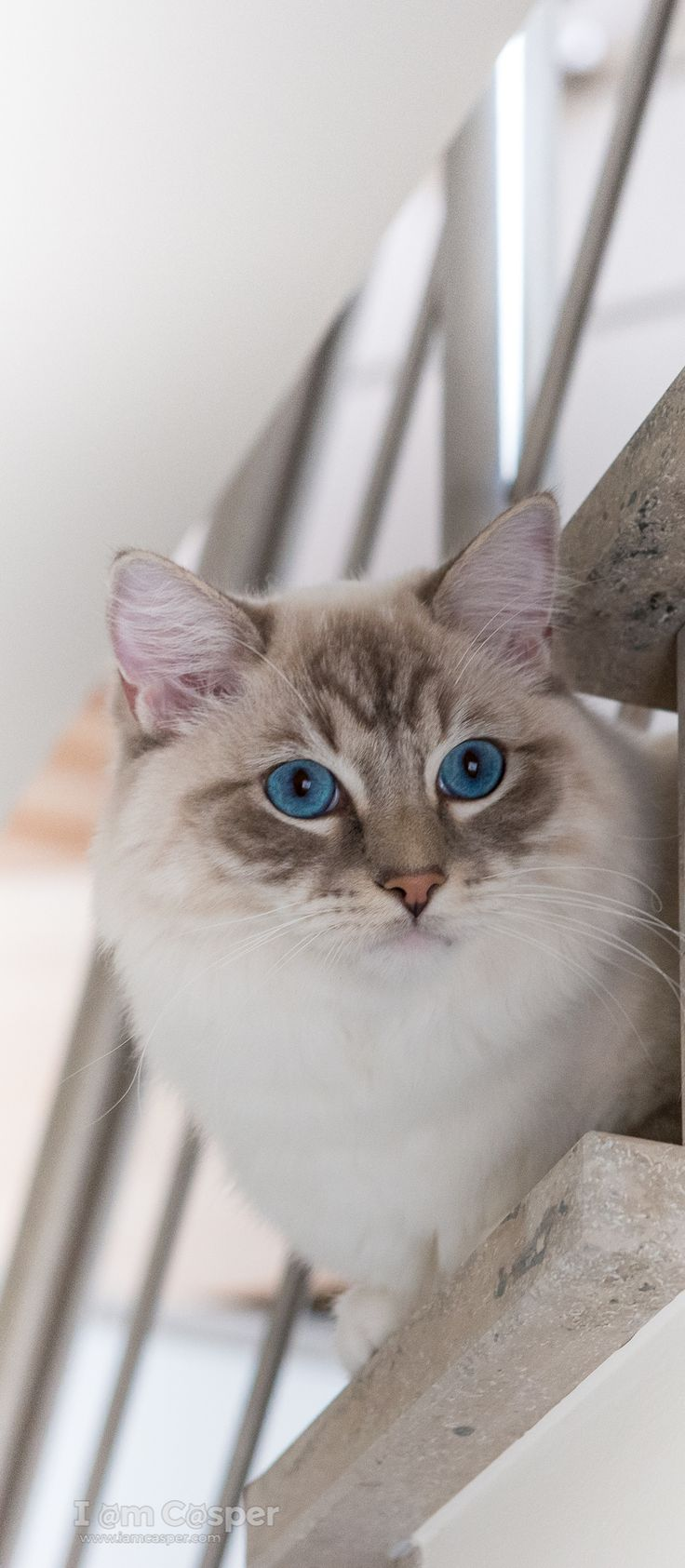 Cat Photography Tips And Tricks To Make Fabulous Cat Pictures Also Check  Out Our Cat