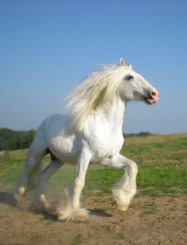 Шайр - фотографии - equestrian.ru