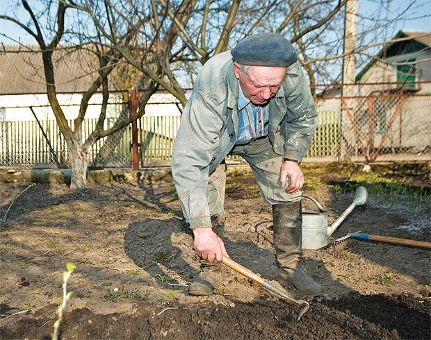 Zahradničení pro začátečníky: Příprava záhonů pro jarní výsev - Užitková zahrada