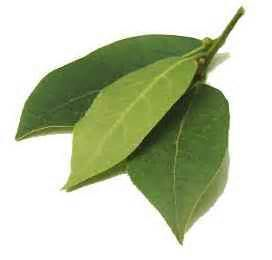 bay leaf Leaves - Bing Images