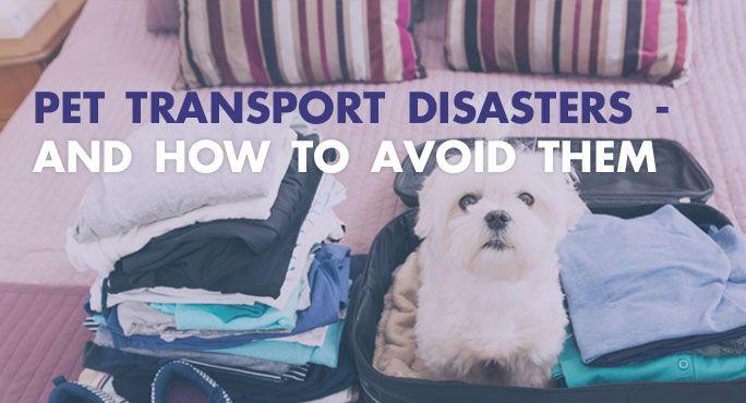 Pet Transport Disasters - And How to Avoid Them http://www.starwoodanimaltransport.com/blog/pet-transport-disasters-and-how-to-avoid-them @starwoodpetmove