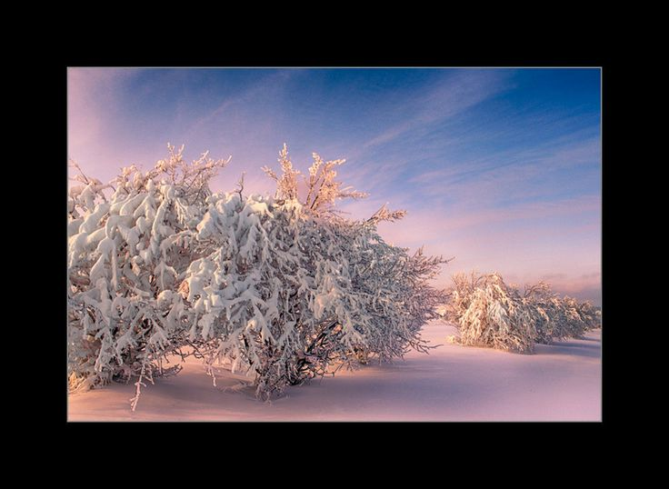 trees HDR by Catalin Petre on 500px