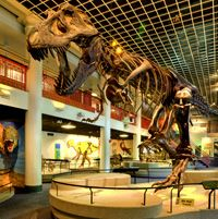 """Academy of Natural Sciences of Drexel University — visitphilly.com Or in our house """"the dino museum"""""""