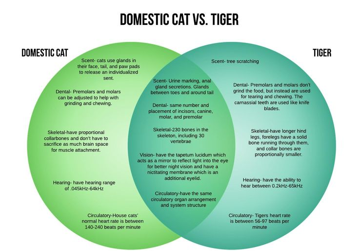 the similarities and differences of dogs and cats as domestic animals Read about the differences between cats and dogs such as their behavior, physical traits, and their metabolism - learn more about this pet health topic from banfield pet hospital.