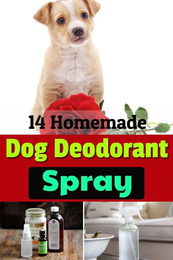 14 Homemade Deodorant Spray For Dogs Deodorant Spray Diy