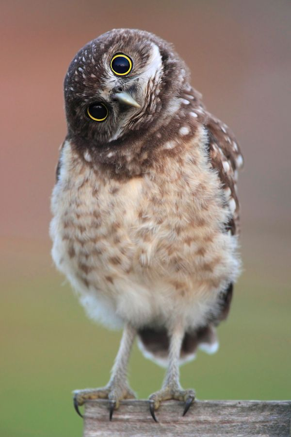 cute owl images - 600×900
