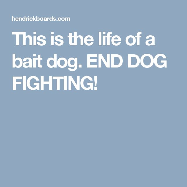 This is the life of a bait dog. END DOG FIGHTING!