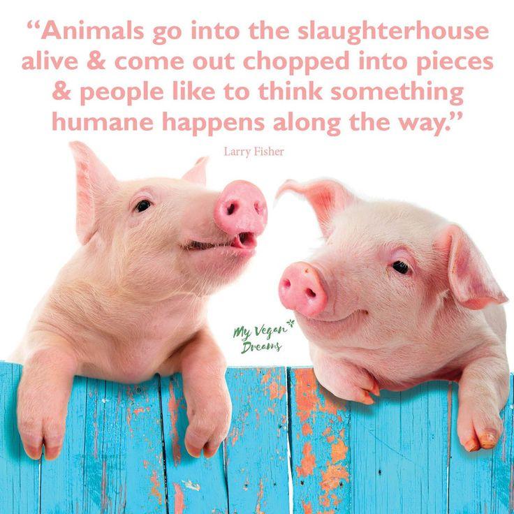 humane killing no such thing