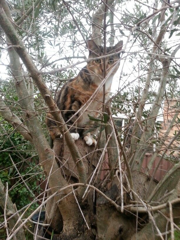 Abby in the olive tree