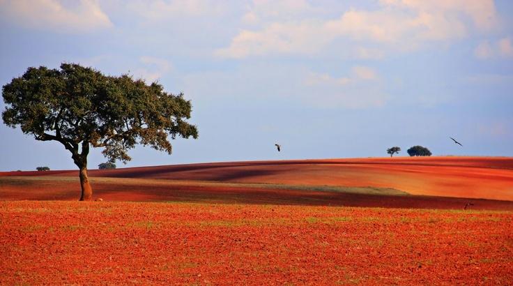 A caminho do Pulo do Lobo - Mértola (Portugal) by mpedroso www.retina.pt