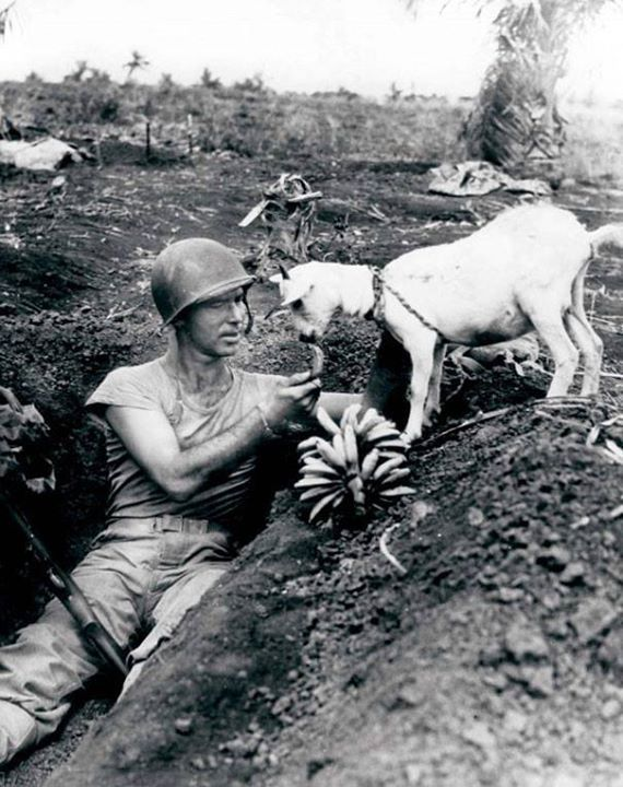 Soldier shares a banana with a goat during the battle of Saipan circa 1944.