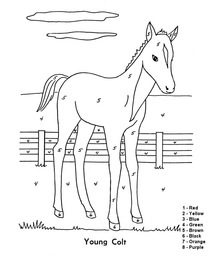 color by numbers page farm colt in barnyard