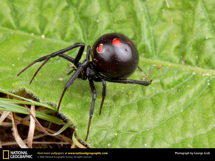 8 Best Spiders Images On Pinterest