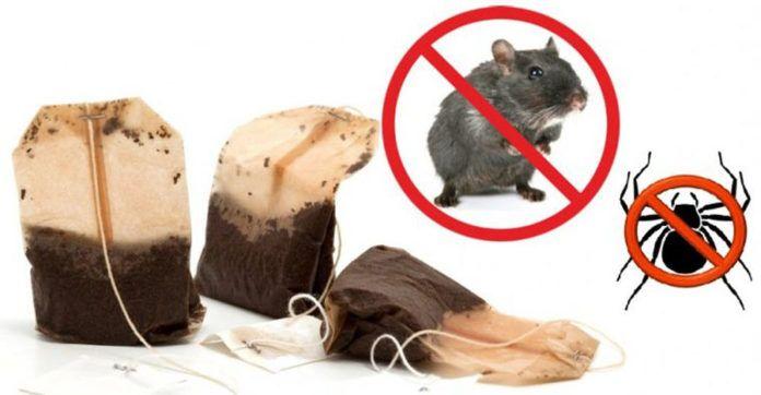 Das Problem zu lösen mit den Mäusen und Spinnen in deinem Zuhause kann so einfach sein. Das einzige was du tun musst ist, eine Tasse Pfefferminztee aufzukochen und dann den Teebeutel in den Raum zu legen, wo Spinnen und Mäuse ein Problem waren. Am besten ist es, wenn du 4 Teebeutel verwendest, damit