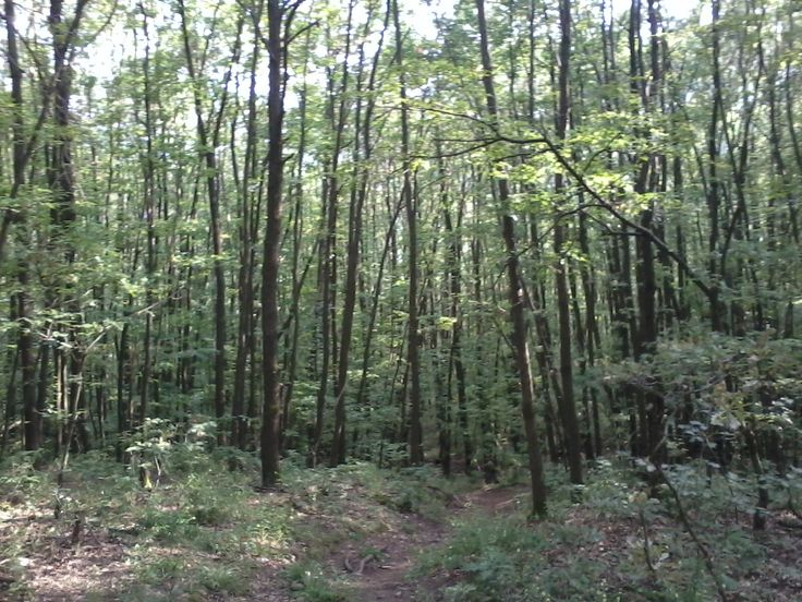 Bükkszentkereszt erdő