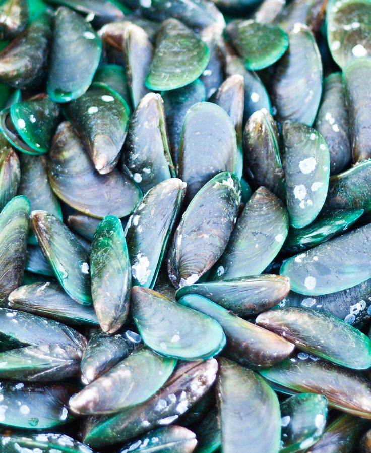 Ingredient Spotlight:     New Zealand Green Lipped Mussel Powder  has long been prized for its nutritional support for joint health and mobility. It has gained an international reputation among consumers as a natural product with inflammation management properties – an effect that has been attributed, by a body of science to its lipid functions. Learn more about this wonderful ingredient.