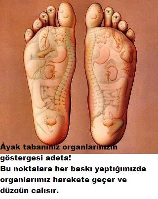 Ayakta hangi organ hangi kısma bağlı