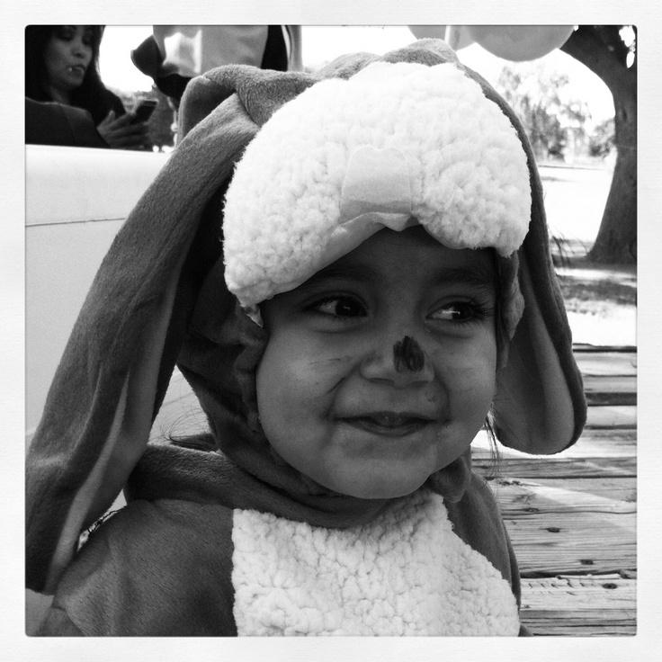 Ava the bunny 10/31/12