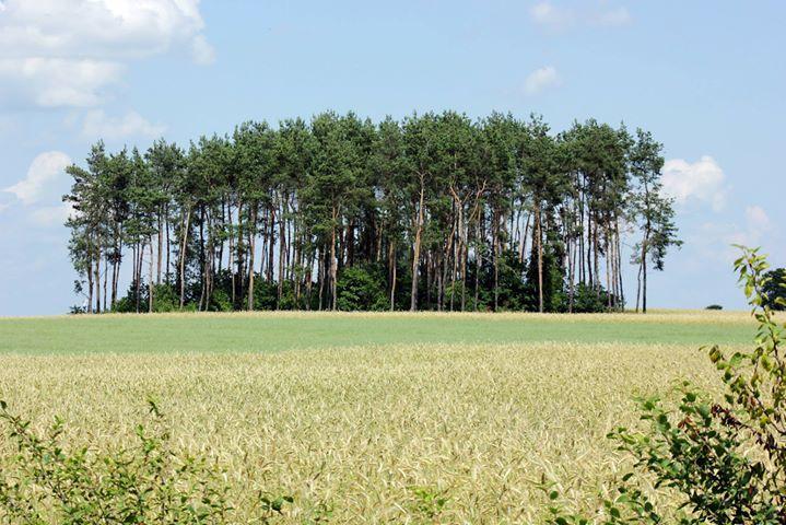 Rutki-Marszewice, Ciechanów