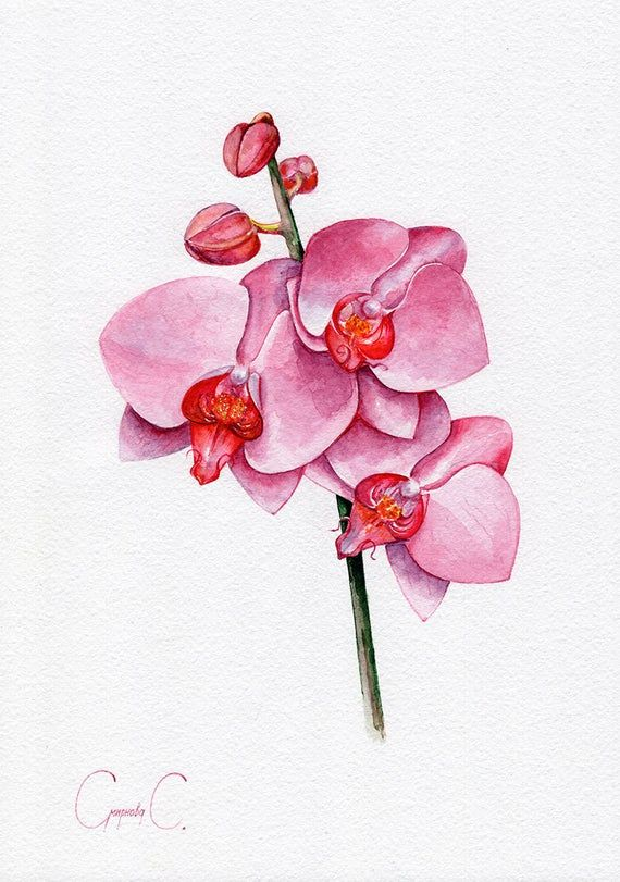 Orchid Flowers Pink White Blue Yellow Watercolor Etsy In 2020 Orchid Flower Orchid Illustration Orchid Tree