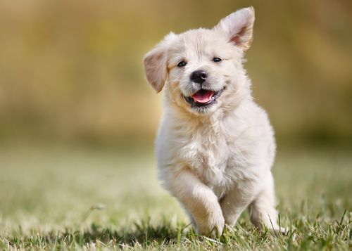 Scoprite come fanno i cani a comunicare con le espressioni facciali