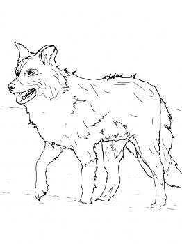 113 best images about favorite dog colouring pages on for Border collie coloring pages