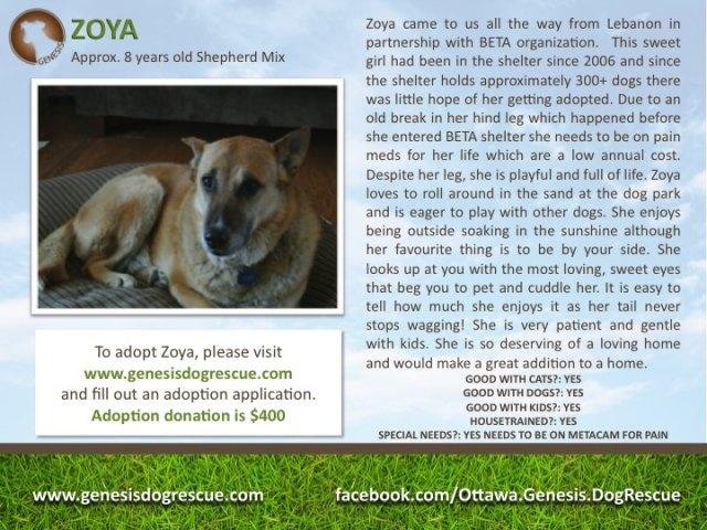 Good Dog Rescue Ottawa Ontario