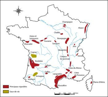 French Wine Guide | France Travel Guide