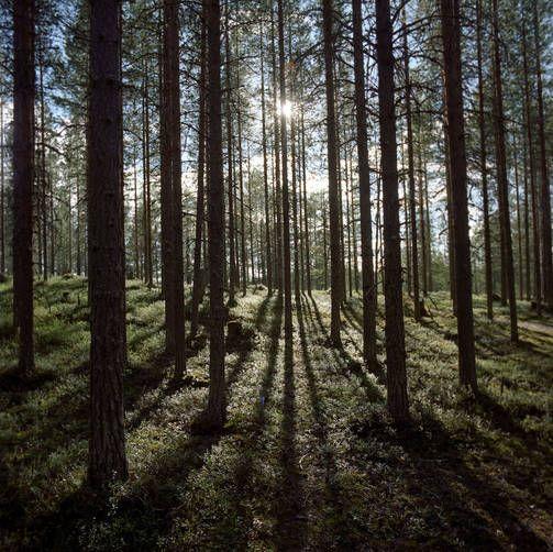 National Park Hossa in Kainuu, Finland. - Hossa sopii hyvin koko perheen retkikohteeksi.