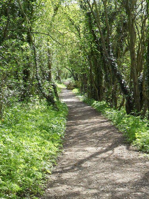 Footpath through wild garlic, Hay Head Woods, Aldridge.Walsall, England