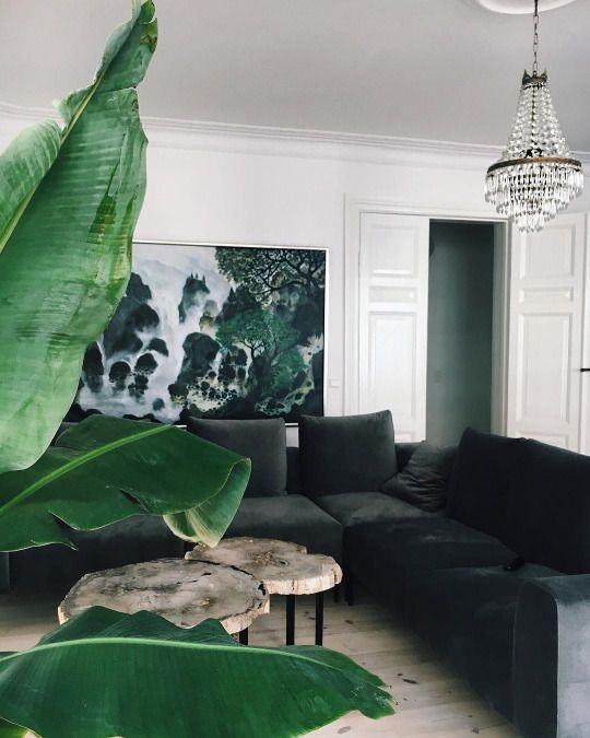Black sectional sofa and leafy artwork look fabulous with the large banana plant. The vintage chandelier adds glamour to this stylish living room.