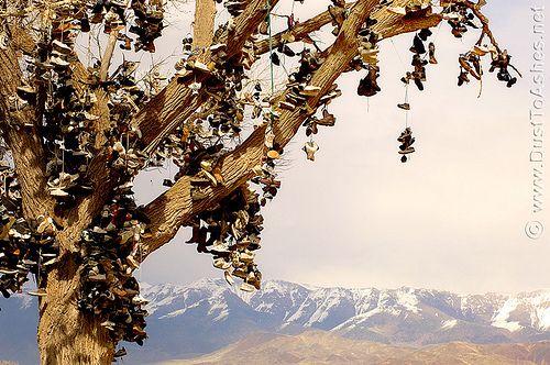 THE SHOE TREE OF MIDDLEGATE A tree bears footwear on the loneliest road in America