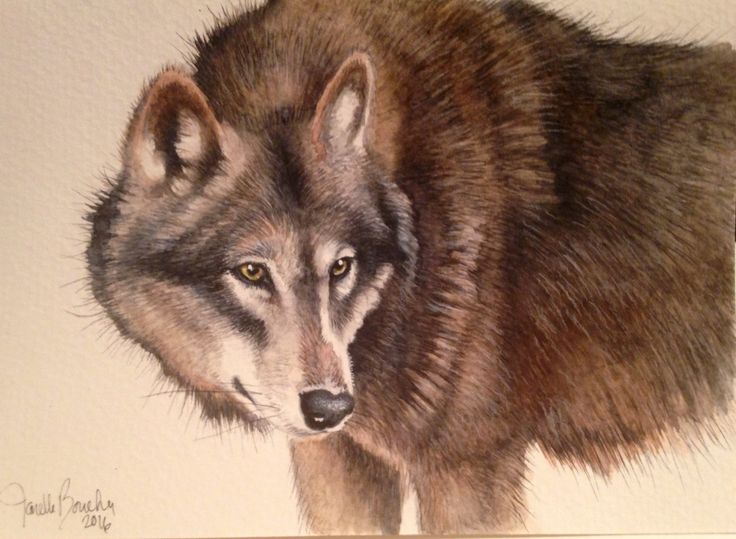 Wolf on watercolour card 5x7