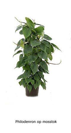 Planten hydrocultuur - IPS